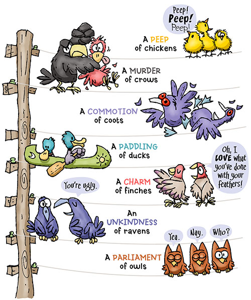 to help explain that many forms of collective nouns are based on our feathered friends.